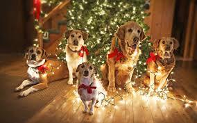 dog christmas christmas dogs tree steemit