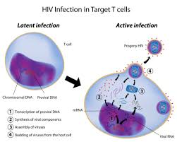 immunity disorders aids and mechanism of hiv infection