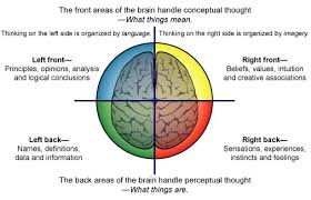 Which Part Of The Brain Consists Of Two Hemispheres The Four Regions Of The Thinking Brain Made Simple Part Two