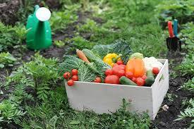 start your smart gardening today scott ange