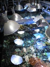 Reef Aquarium Lighting Thoughts On Reef Aquarium Lighting U2026 Keep Your Eye On The Prize By