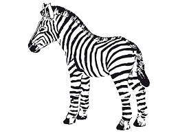 coloring pages for zebra