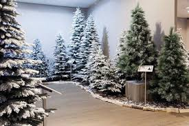artificial trees product range ardcarne garden centre
