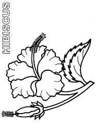 coloring pictures of hibiscus flowers hibiscus flower coloring pages bloom and burgeon hibiscus flower