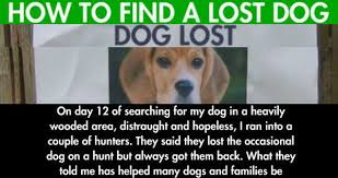 Lost Dog Meme - how to find a lost dog weknowmemes