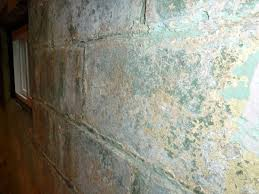 Cleaning Painted Walls by Cleaning Mold From Basement Walls Bjhryz Com
