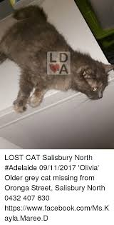 Missing Cat Meme - l d lost cat salisbury north adelaide 09112017 olivia older grey