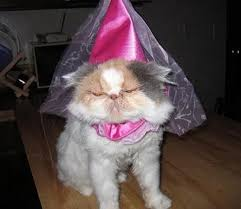 in costumes best 25 cats in costumes ideas on costumes