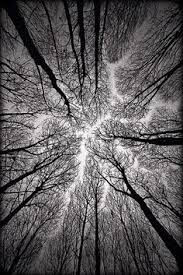 landscape photographer of the year 2011 winners planets trees