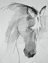 393 best animal drawing images on pinterest dogs animal