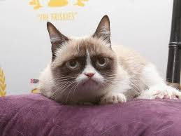 Grumpy Cat Has Died Youtube - grumpy cat doesn t earn 100m says owner the independent