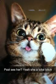Lil Bub Meme - if lil bub were on snapchat album on imgur