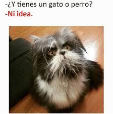 Gato Meme - perro o gato meme subido por jake nico long memedroid