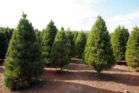 trees could be used to help sterilize devices
