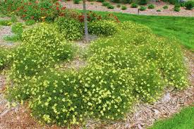 native nebraska plants top 10 perennials steinbrink landscaping u0026 greenhouses