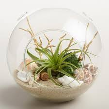 terrariums modern hanging and recycled glass world market