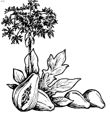 flowers coloring book 60 flora coloring pages plants trees