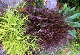 purple grass image result for http hgtv sndimg