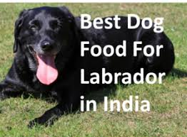 best dog food for labrador in india x indian buyer