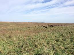 prairie oak ecosystems of the for prairie conservation bison serve as tools kbia