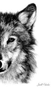 wolf fine art print illustration print art print pencil drawing