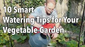 10 smart watering tips for your vegetable garden youtube