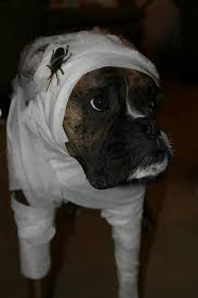 Boxer Puppy Halloween Costumes Halloween Costumes Thinking 5 Boxer Forum