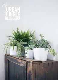 Urban Jungle Living And Styling by Urban Jungle Book Living And Styling With Plants Plants Urban