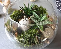 glass bowl terrarium gardening a beautiful terrarium gardening