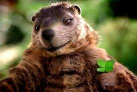 gus groundhog