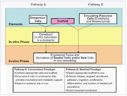 part ii 6 u2013 translational pathway for tissue engineered aortic