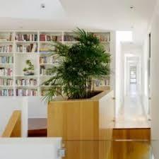 Low Light Indoor Trees Best Plants That Suit Your Bathroom Fresh Decor Ideas