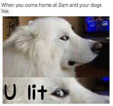 Drunken Memes - drunken memes album on imgur