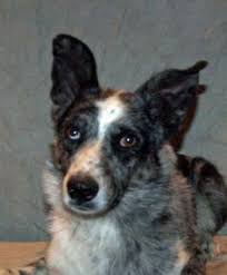 australian shepherd cattle dog australian cattle dog mouse pad cattle dog mousepad round cow