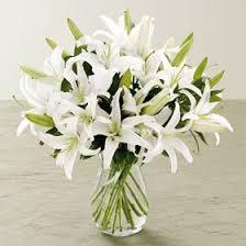 casablanca lilies casablanca lilies florist orlando fl in bloom florist same