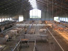 china made cheap cattle house prefabricated steel structure milk
