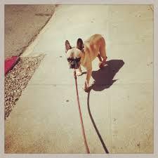 rock u0026 roll doggy pet grooming 39 photos u0026 27 reviews pet