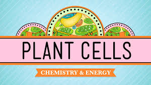 plant cells crash course biology 6 youtube
