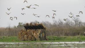 Natural Hunting Blinds Riceland Waterfowl Club Duck Lease Duck Blinds Katy Tx Garwood