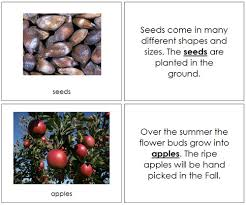 montessori tree printable montessori inspired apple unit hundreds of resources