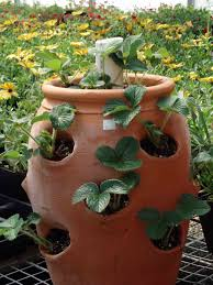 Indoor Container Gardening - pictures of house plants and indoor gardens indoor plants expert