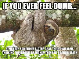 Angry Sloth Meme - patient sloth memes quickmeme