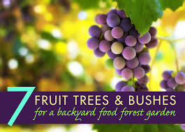 Fruit Tree Garden Layout For Perennial Fruit Gardens Berries Are The Way To Grow