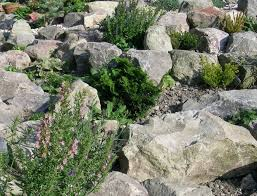 garden rockery ideas garden ideas help achieve a beautiful garden in heathfield u0026 east
