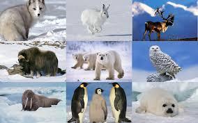 Animals In The Winter Irena U0027s Group Animal Week Polar Animals And Hibernating Animals