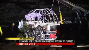 Bathtub Reglazing St Louis Mo by Spooked Carriage Horse Drowns After Running Into The Missouri