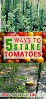 78 best growing tomatoes images on pinterest plants tomato