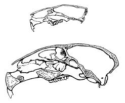 predict rabbits run skulls