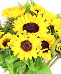 Flower Delivery Free Shipping Flower Haul Online Flower Delivery Free Shipping Sunflower