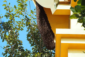 Backyard Beehive What To Do If You Notice You Have A Beehive In Your Backyard